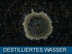 destilliertes_wasser_kl